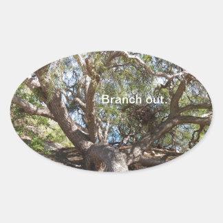 Sprawling Tree Near Santa Barbara on Coast Oval Sticker