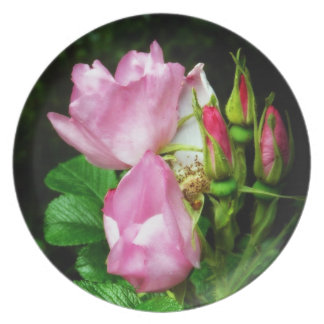 Spray of Beautiful Pink Roses and Rosebuds Party Plate