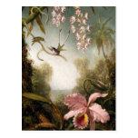 Spray Orchids with Hummingbird Postcard