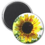 Spread a Little Sunshine!! 6 Cm Round Magnet