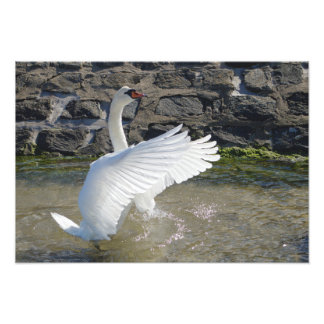 Spread Your Wings Photo Print