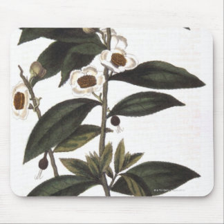 Sprig of tea bush mouse mat