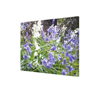 Spring 2016 Bluebells Photo 1 Wrapped Canvas