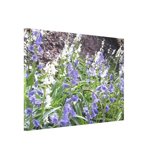 Spring 2016 Bluebells Photo 2 Wrapped Canvas
