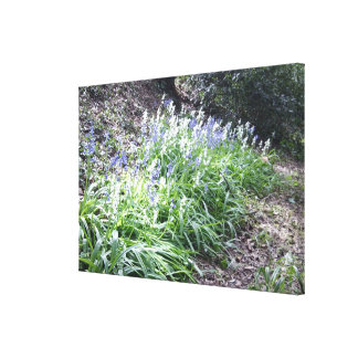 Spring 2016 Bluebells Photo 3 Wrapped Canvas