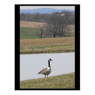 ~ Spring 65 ~ Postcard