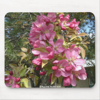 spring at colby community college2 mouse pad