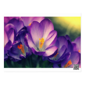 spring background postcard