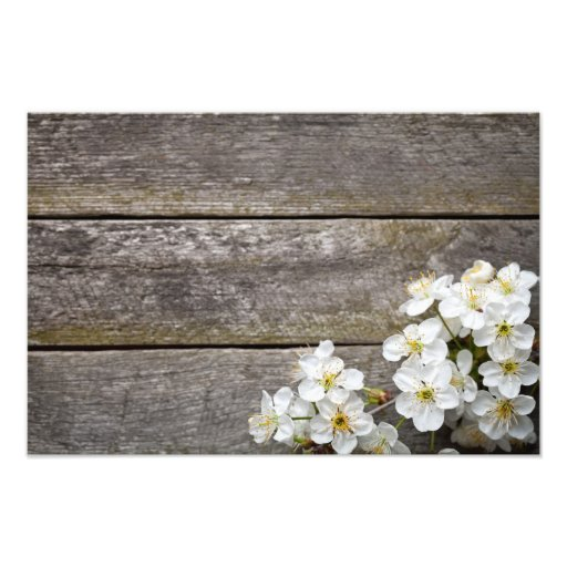 Spring Background With Cherry Flowers Photo