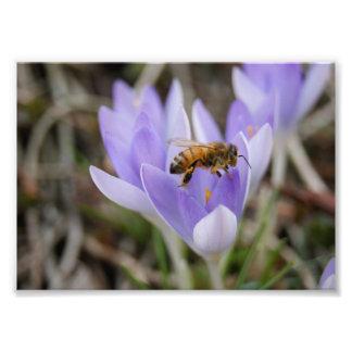 Spring Bee 7x5 Photographic Print