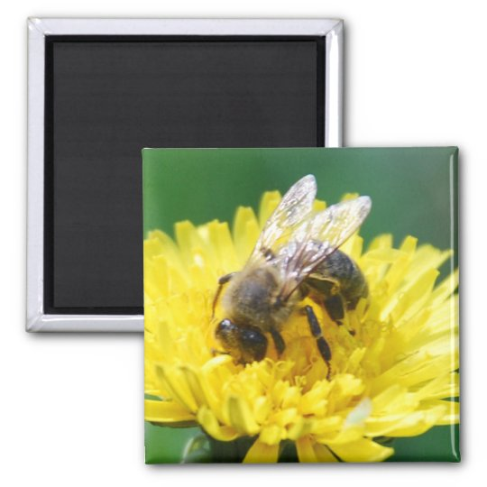 spring bee square magnet