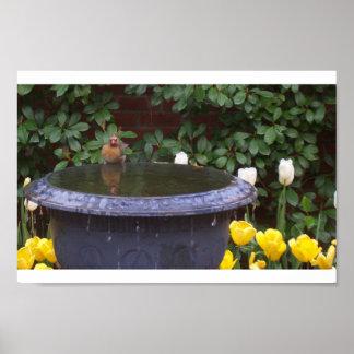 Spring birdbath posters