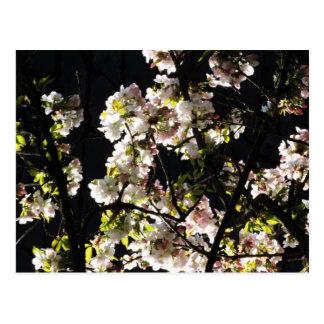 Spring Blossom 2 Postcard