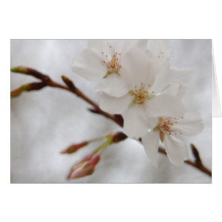 Spring Blossom Note Card