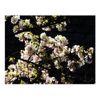 Spring Blossom Postcard