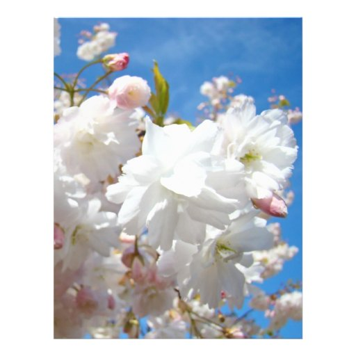 Spring Blossoms Flyers paper Blue Sky Flowers