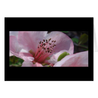 Spring Blossoms III Note Card