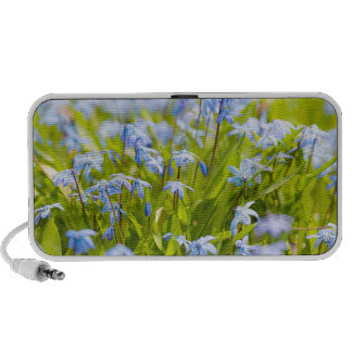 Spring blue flowers glory-of-the-snow iPhone speaker