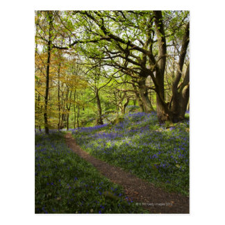 Spring bluebell woods postcard