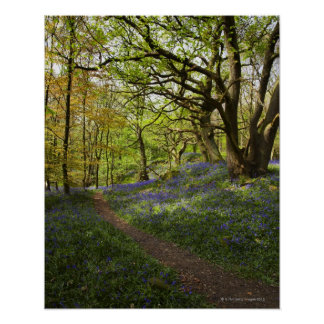 Spring bluebell woods poster