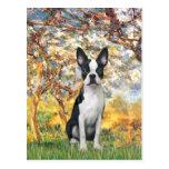 Spring - Boston Terrier #1 Post Card