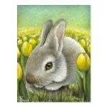 Spring bunny postcard