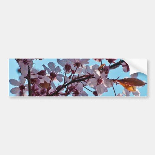 Spring Cherry Blossom Bumper Sticker