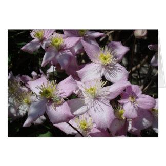 Spring - Clematis Montana Card