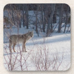 Spring Coyote Coasters