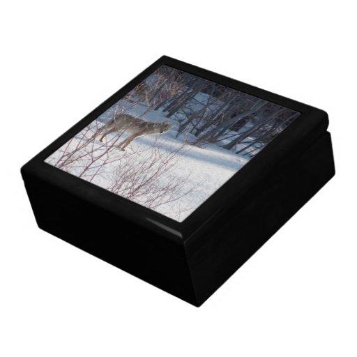 Spring Coyote Jewelry Box