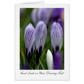 Spring Crocuses - Good Luck on Your Driving Test Card
