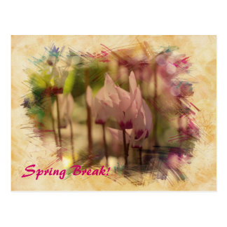Spring cyclamen postcard