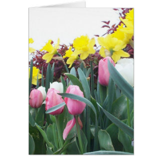 Spring Daffodils and Tulips Card
