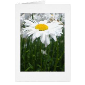 Spring Daisy Card