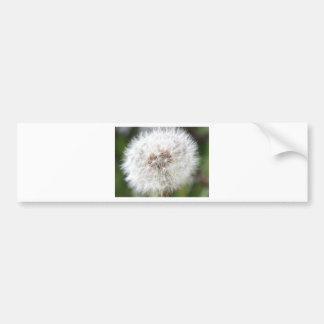 Spring Dandelion  Products Bumper Sticker