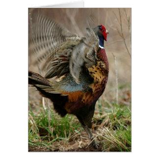 'Spring Fever' Pheasant Notecard