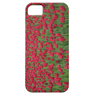 Spring field of red tulips iPhone case
