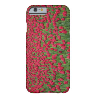 Spring field of red tulips iPhone case Barely There iPhone 6 Case