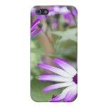 Spring flowering Senetti flowers iPhone 5 Case