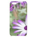 Spring flowering Senetti flowers Cover For iPhone 5C