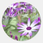 Spring flowering Senetti flowers Sticker