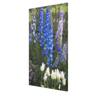 Spring flowers along a garden path, Georgia 2 Stretched Canvas Print