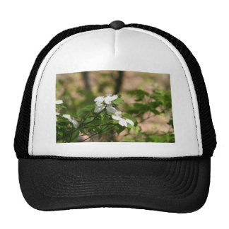 spring flowers cap