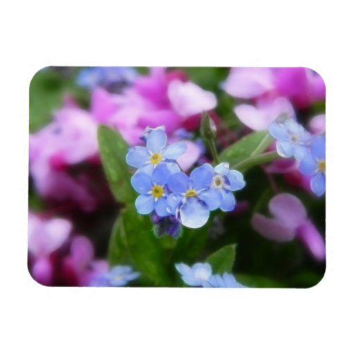 Spring Flowers - Forget Me Nots And Redbuds Rectangle Magnet