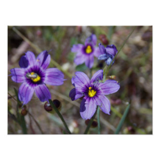 Spring Flowers have Sprung Poster