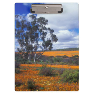 Spring flowers in Namaqualand, South Africa Clipboard