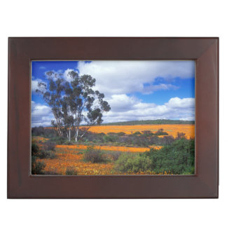 Spring flowers in Namaqualand, South Africa Keepsake Box