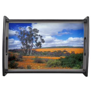 Spring flowers in Namaqualand, South Africa Serving Tray