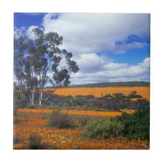 Spring flowers in Namaqualand, South Africa Tile
