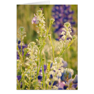 Spring Flowers in the Texas Hill Country Card